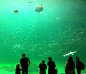 Akvariet (2)